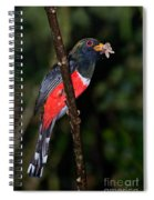 Masked Trogon With Moth Spiral Notebook