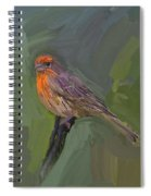 Mating Colors Of The Male Finch Spiral Notebook