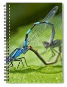Mating Damselflies Spiral Notebook