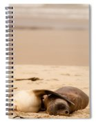 Mating Hookers Sealions Taking A Nap On Beach Spiral Notebook