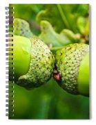 Maturing Acorns Spiral Notebook