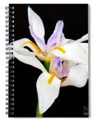 Maui Lilies On Black II Spiral Notebook