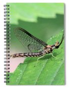 Mayfly Spiral Notebook