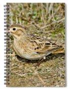 Mccowns Longspur Spiral Notebook