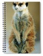 Meerkat Suricata Suricatta Spiral Notebook