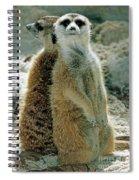 Meerkats Suricata Suricatta Spiral Notebook