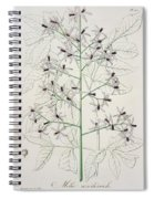 Melia Azedarach From 'phytographie Medicale' By Joseph Roques Spiral Notebook