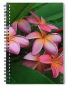 Melia Hae Hawaii Pink Tropical Plumeria Keanae Spiral Notebook