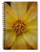 Mellow Yellow  2 Spiral Notebook