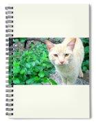 Meow Spiral Notebook
