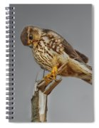 Merlin Falcon Searching For Prey Spiral Notebook
