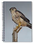 Merlin Falcon Spiral Notebook