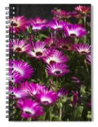 Mesembryanthemums 3 Spiral Notebook