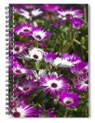 Mesembryanthemums 5 Spiral Notebook