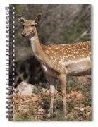 Mesopotamian Fallow Deer 2 Spiral Notebook
