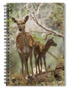 Mesopotamian Fallow Deer 4 Spiral Notebook