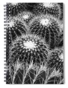 Mexican Golden Barrel Cacti Spiral Notebook