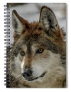 Mexican Grey Wolf Upclose Spiral Notebook