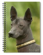 Mexican Hairless Dog Spiral Notebook