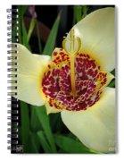 Mexican Shell Flower Spiral Notebook