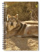 Mexican Wolf Close Up Spiral Notebook
