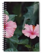 Mexico Pink Beauties By Tom Ray Spiral Notebook