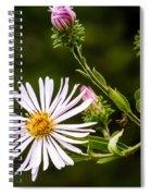 Michaelmas Daisy Spiral Notebook