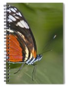 Micro Wings... Spiral Notebook