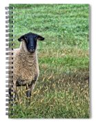 Middle Child - Blackfaced Sheep Spiral Notebook