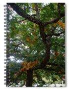 Mighty Fall Oak #2 Spiral Notebook