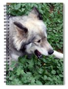 Miley The Husky With Blue And Brown Eyes - Impressionist Artistic Work Spiral Notebook