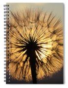 Beauty Of The Dandelion 2 Spiral Notebook