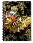Millipede Polydesmida - Sigmoria Aberrans Spiral Notebook
