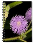 Mimosa Pudica  Spiral Notebook