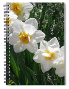 Miner's Wife Daffodils Spiral Notebook