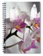 Mini Orchids 1 Spiral Notebook