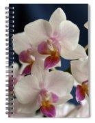 Mini Orchids 3 Spiral Notebook