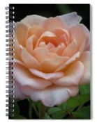 Mini Rose Spiral Notebook