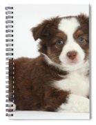 Miniature American Shepherd Puppies Spiral Notebook
