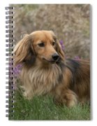 Miniature Long-haired Dachshund Spiral Notebook