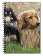 Miniature Long-haired Dachshunds Spiral Notebook