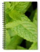 Mint Spiral Notebook