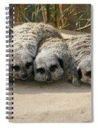 Mischievous Meerkats Spiral Notebook