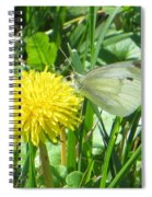 Miss Busy Butterfly Spiral Notebook