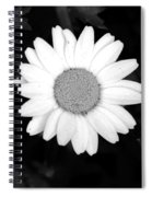 Miss Daisy Spiral Notebook