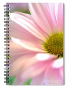 Miss Daisy Spiral Notebook