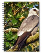 Mississippi Kite Spiral Notebook
