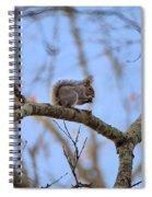 Mister Squirrel Spiral Notebook