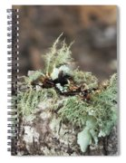 Misty Moss Spiral Notebook