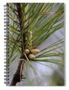 Misty Pines In Spring 2013 Spiral Notebook